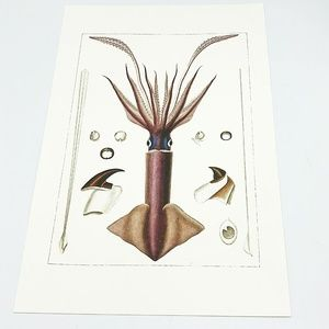 American Museum of Natural History Frameable Print